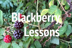 Be Still My Soul – Lessons from the Blackberry Patch
